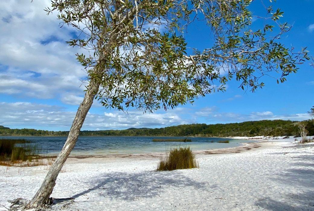 Lake Mckenzie Fraser Island