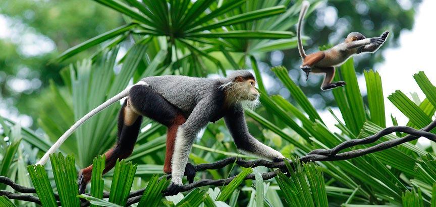 Monkey at Singapore Zoo