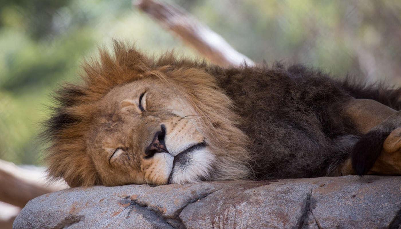 Glamping Australia: werribee open range zoo