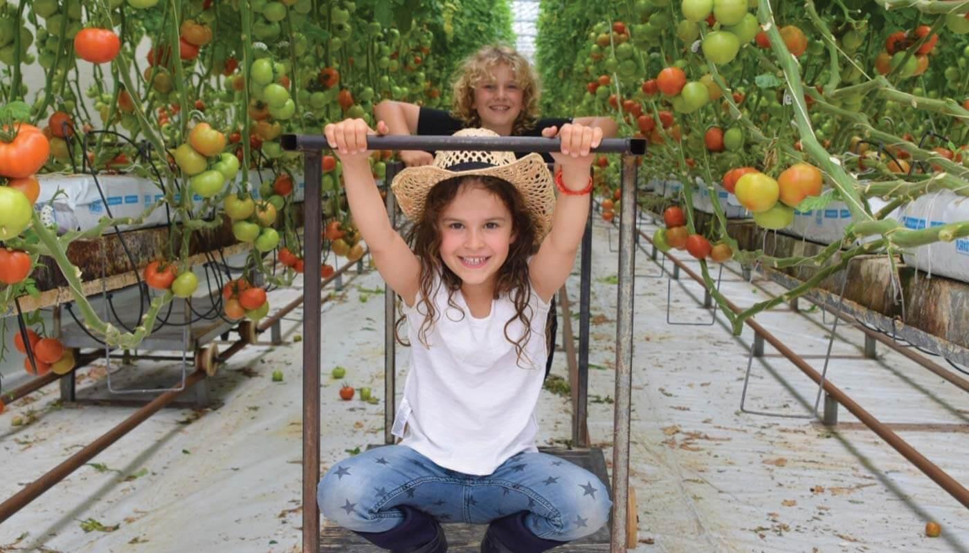 Ricardoes Tomatoes & Strawberries © Aleney de Winter