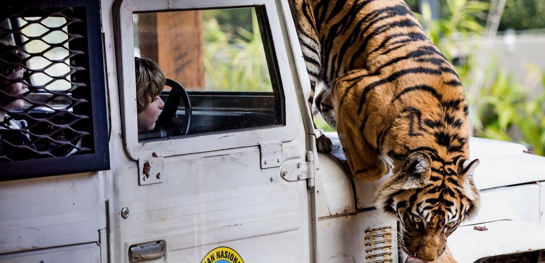 Conservation Zoos - Taronga Zoo