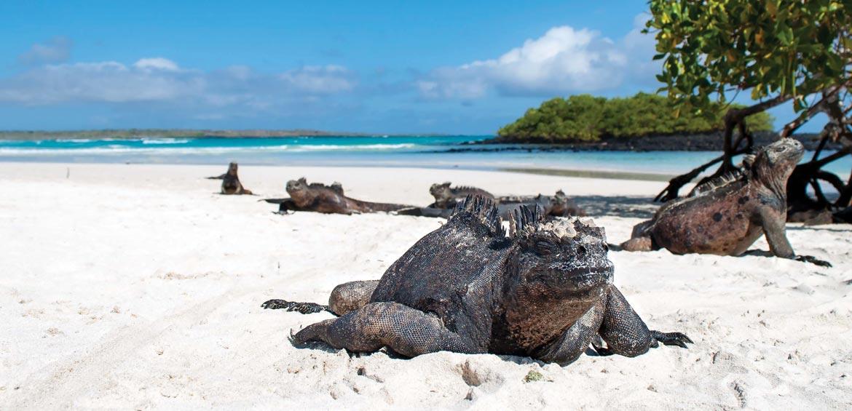 Galapagos Island family tour