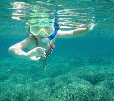 Snorkelling at Pinetrees Lord Howe Island