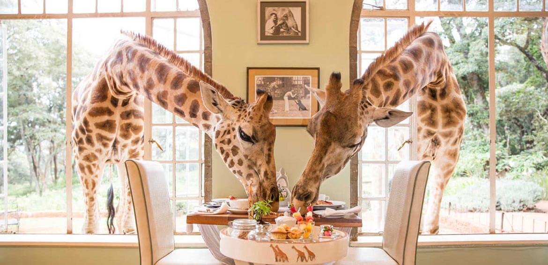 Giraffe Manor, Courtesy of The Safari Collection