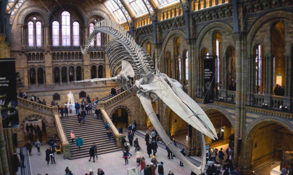 uk-natural-history-museum