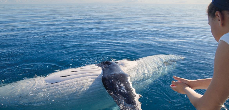 Best whale watching Australia fraser island