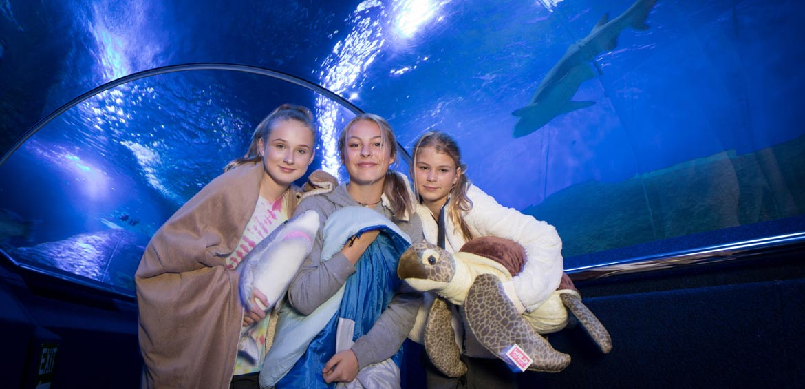 Zoo sleepover at AQWA aquarium
