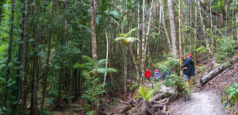 Bushwalking on Fraser Island
