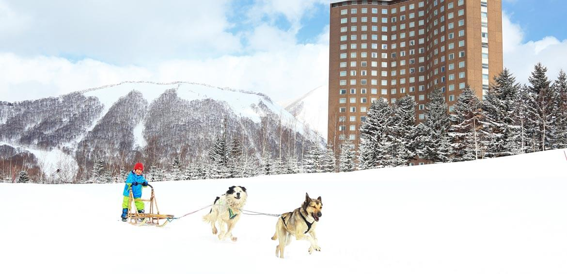 Dog sledding at Rusutsu Resort