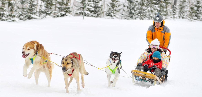 Ski Japan Dogsledding at Rusutsu