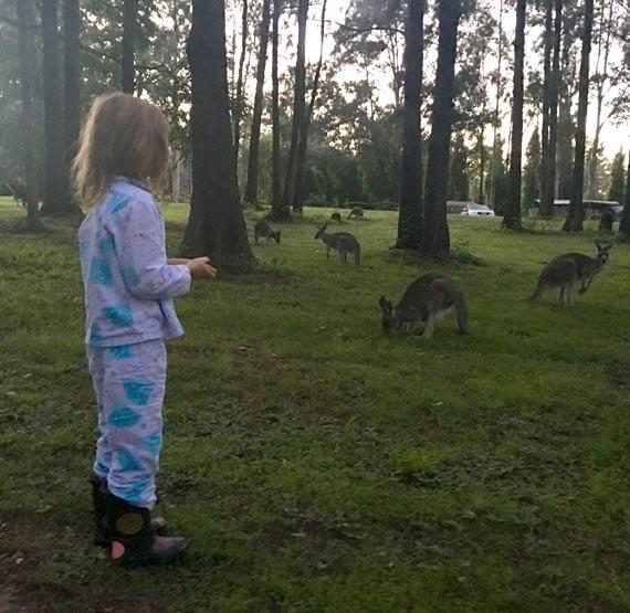 Girl feeding the kangaroos