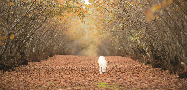 country camping town manjimup truffle dog