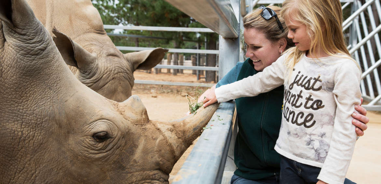 Jamala Wildlife Lodge patting rhino