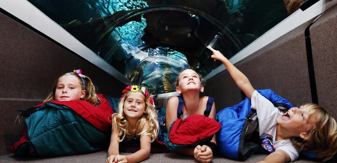 Zoo sleepover at SEA LIFE Queensland