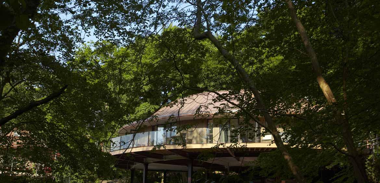 Treehouse Chewton Glen