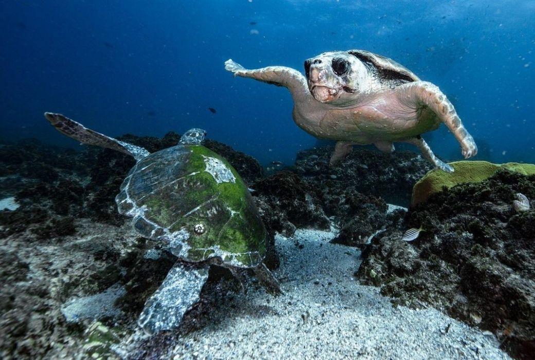 Sea turtles on Sundive Byron Bay