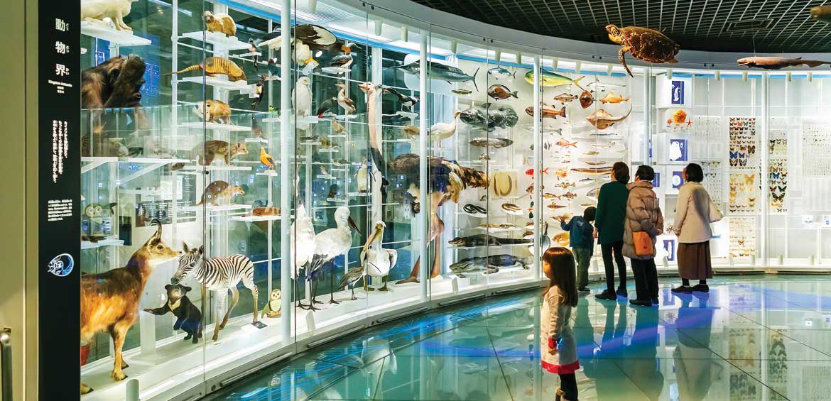 National Museum of Nature and Science offers a wide variety of natural history exhibitions and interactive scientific experiences Tokyo museum japan