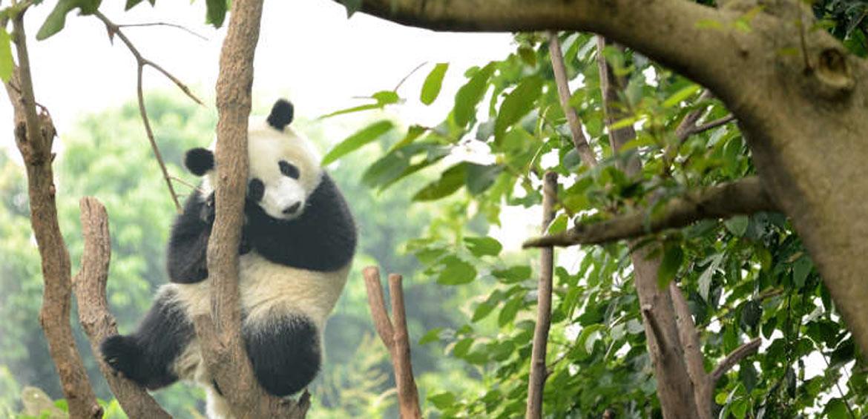 China with mumpacktravel panda