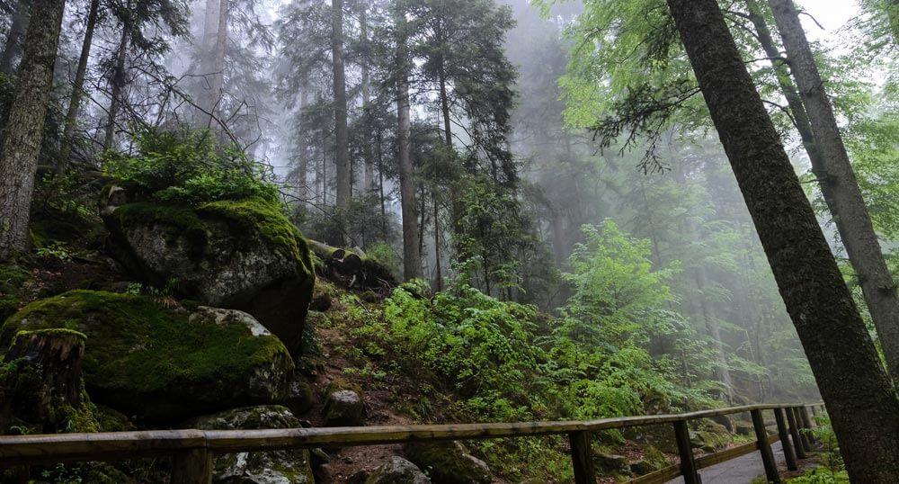 Triberg, The Black Forest