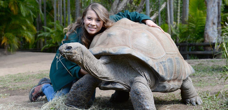 Bindi Irwin and tortoise at Australia Zoo