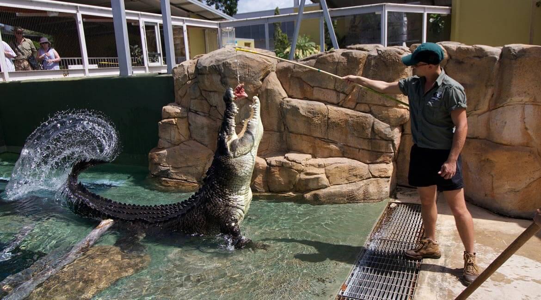 Croc feeding, Crocosaurus Cove