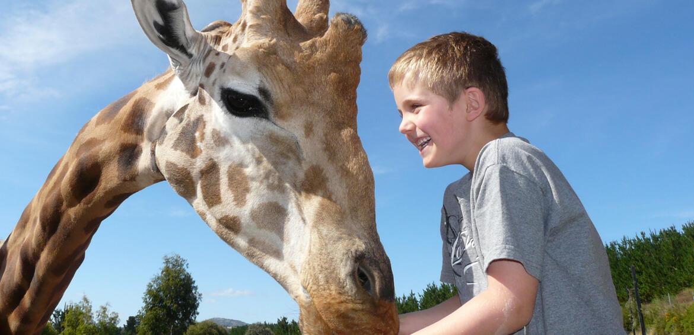 Feeding a giraffe at National Zoo & Aquarium