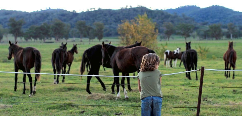 Horses, Upper Hunter