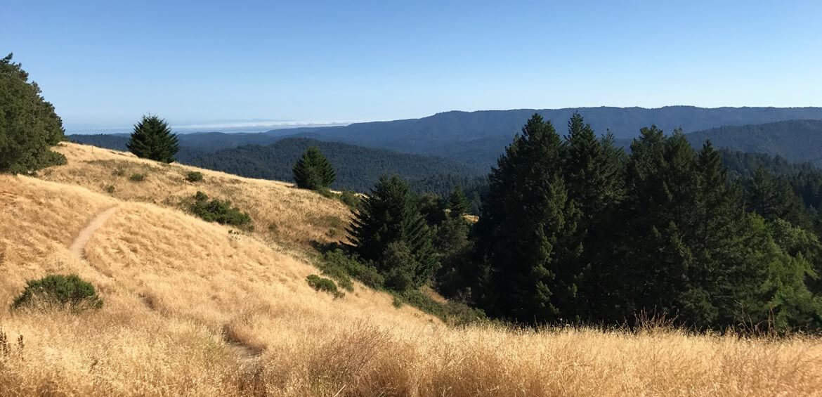 Views from the California Redwoods