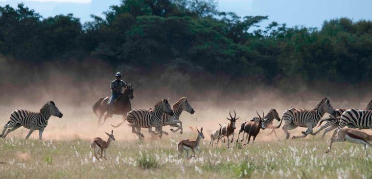 Horizon Horseback Safaris