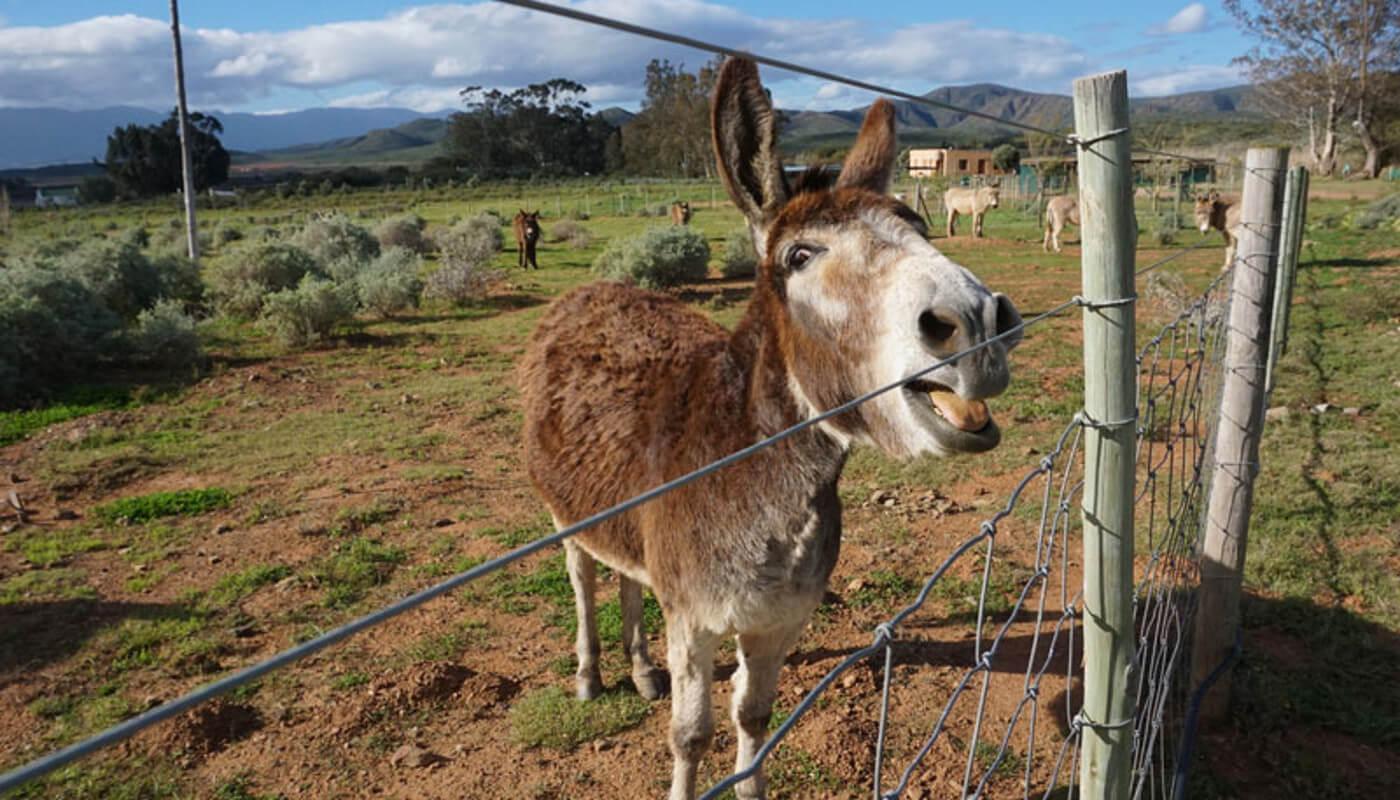 Eseltjierus Donkey Sanctuary
