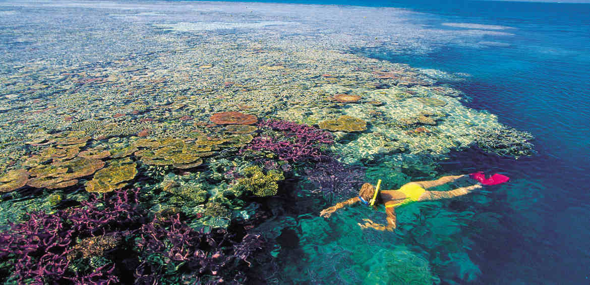 Crystal clear snorkelling © Whitsundays Tourism