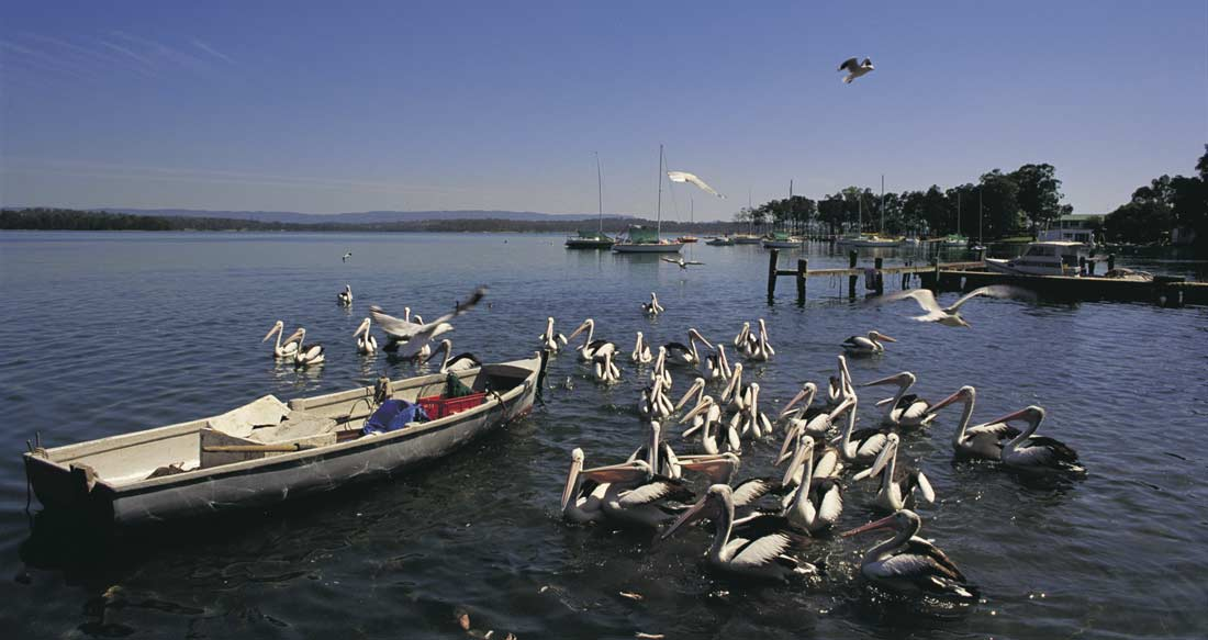 things to do in Newcastle with kids Mannerine Park, Lake Macquarie © Grenville Turner; Destination NSW