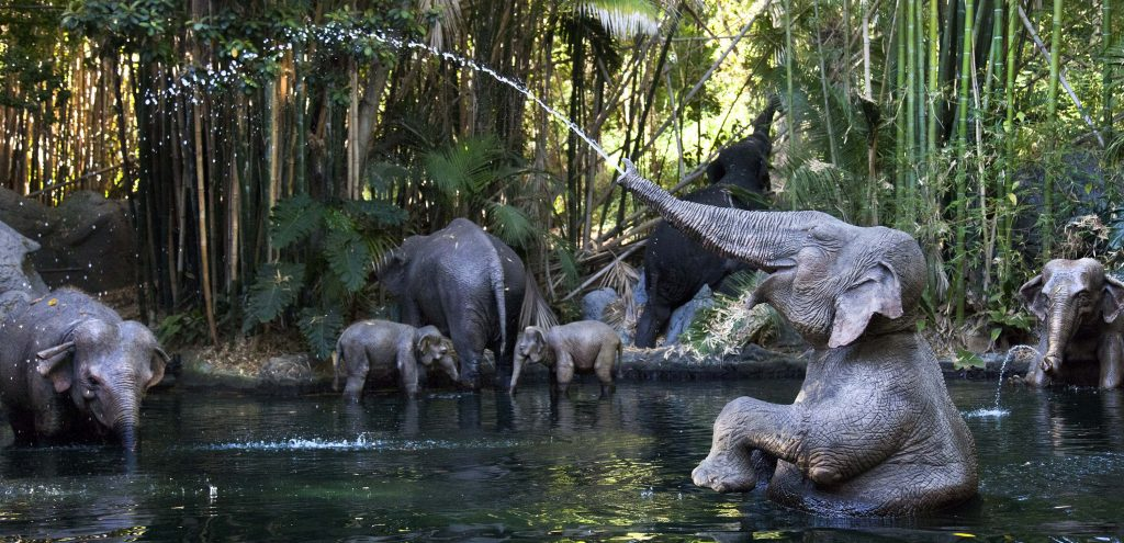 Jungle Cruise © Disney