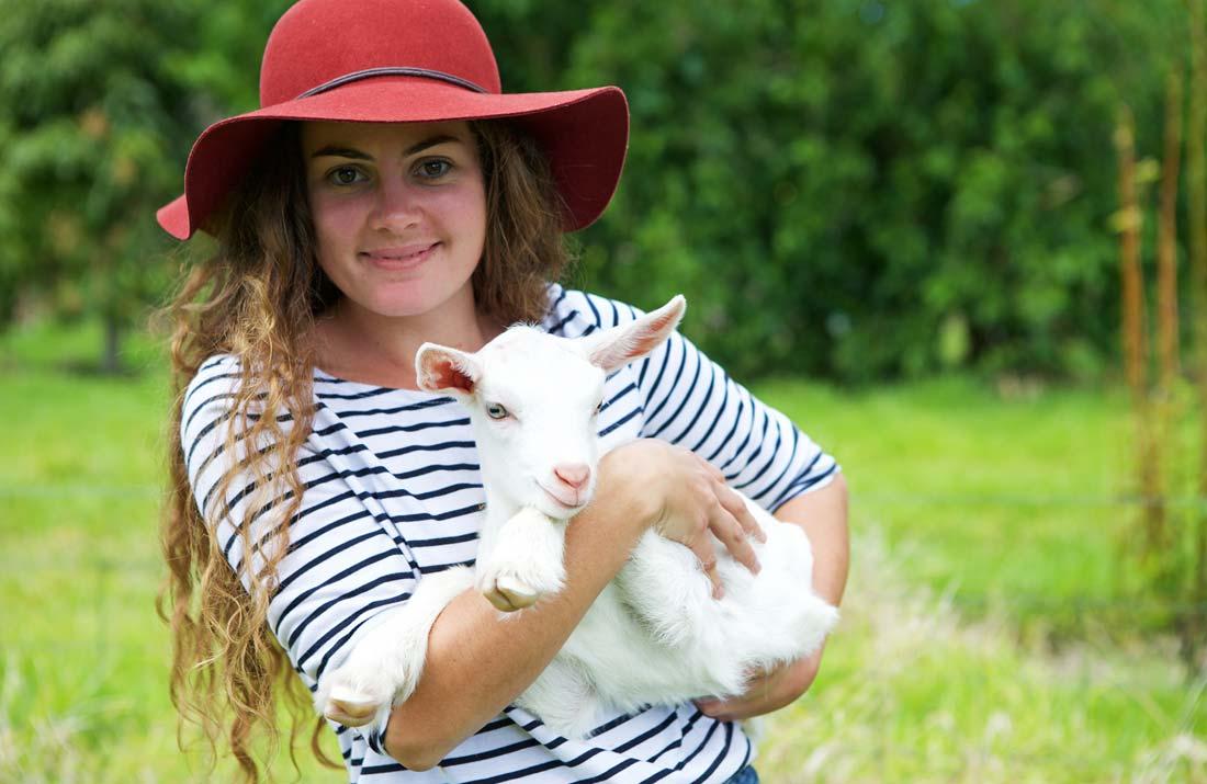 Goat on Norfolk Island