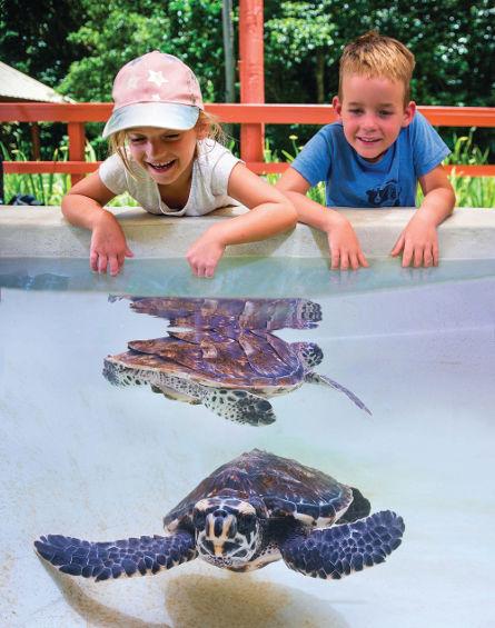 Kids love meeting the turtles at Kula WILD Adventure Park