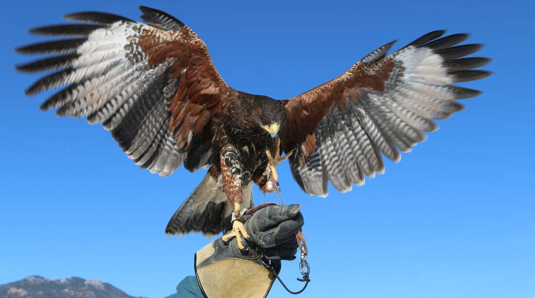 Falconry at the Broadmoor