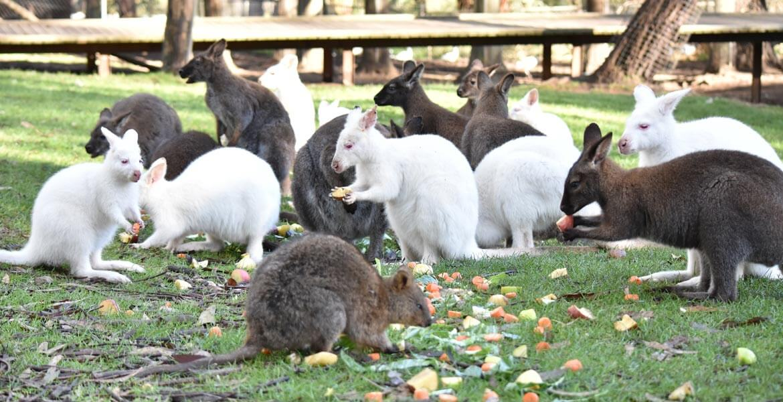Feeding at Gorge Wildlife Park