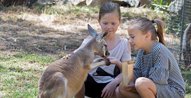 Kangaroo feeding at Gorge Wildlife Park