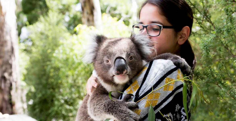 Koala at Gorge Wildlife Park