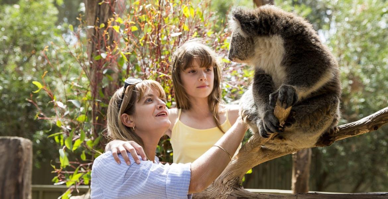 Koala petting with SeaLink