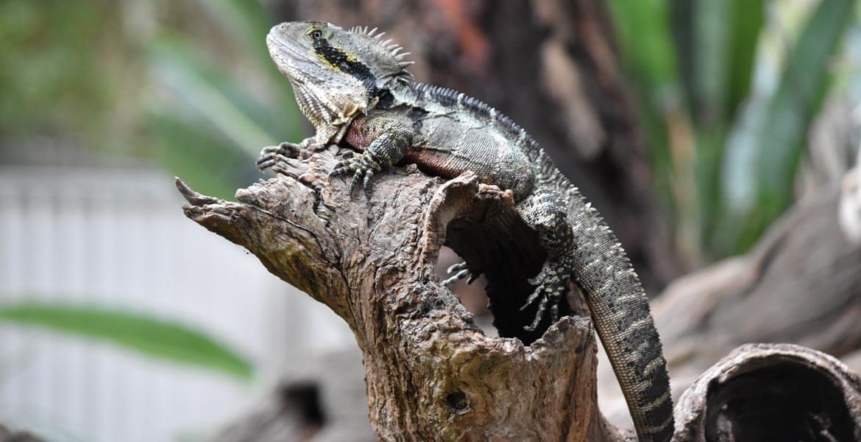 Lizard at Gorge Wildlife Park