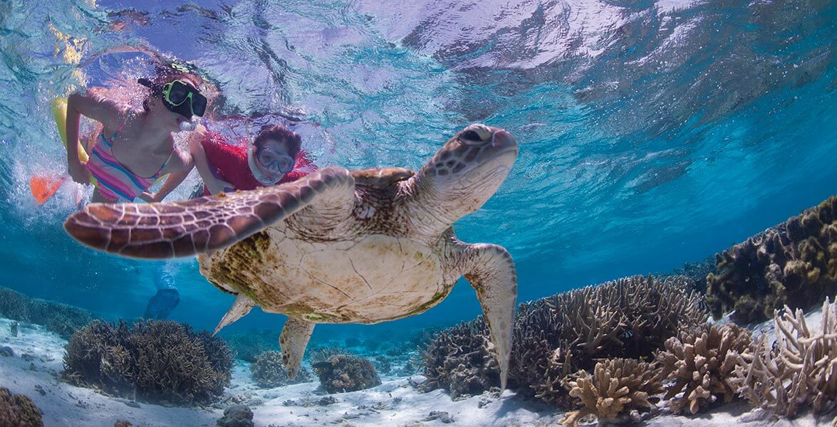 Snorkelling the Southern Great Barrier Reef
