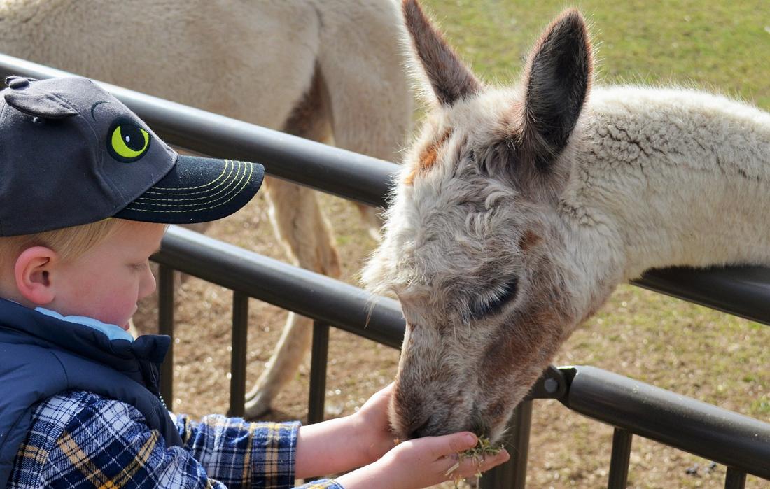 Mowbray Park FarmStay, Picton