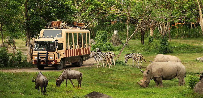 Safari journey at Bali Safari and Marine Park
