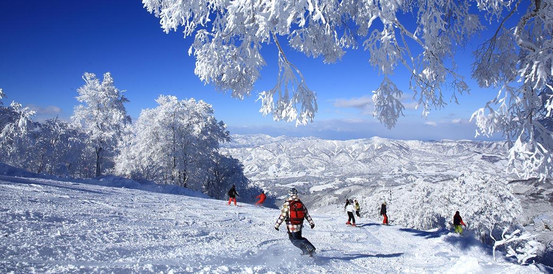 Skimax Holidays - Japan