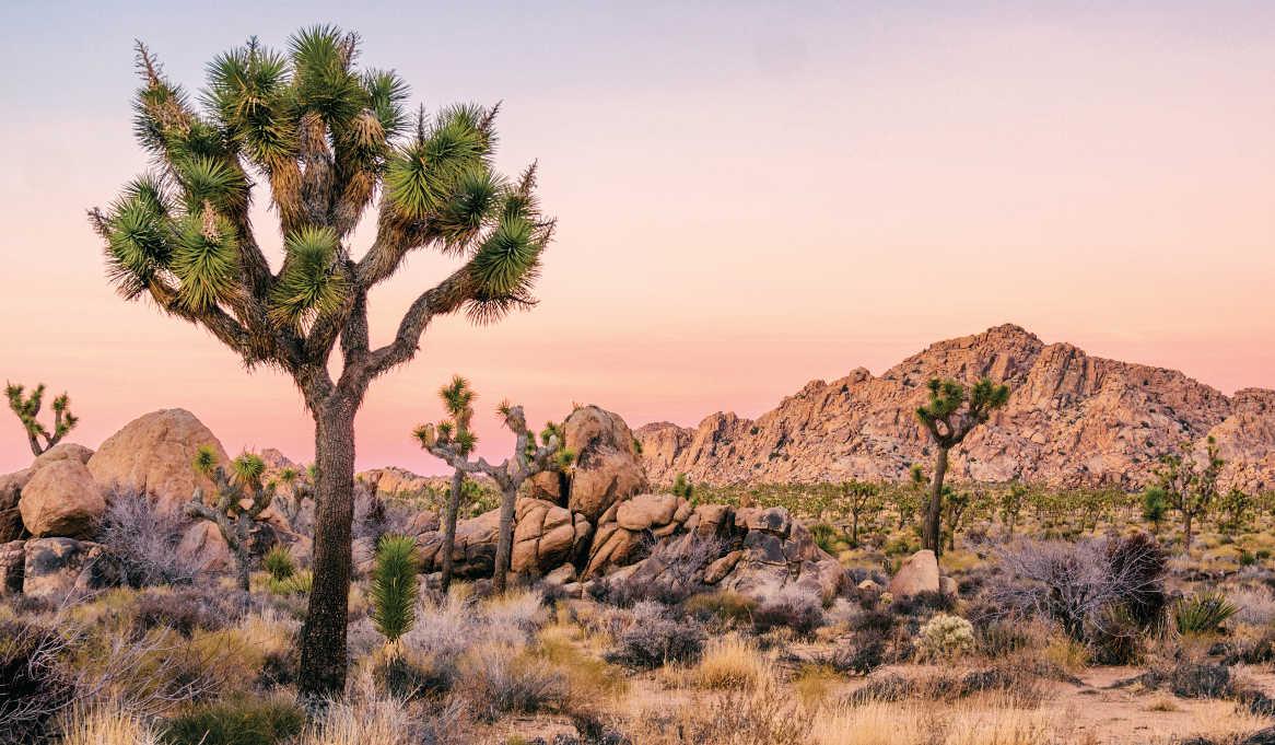 Joshua Tree National Park © Dennis Silvas via Shutterstock.com