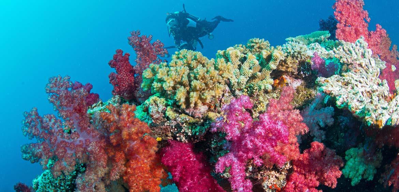 Vibrant underwater corals