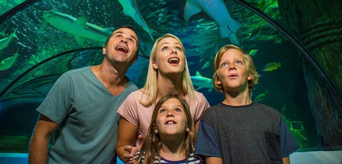 Find fishy fun at SEA LIFE Sunshine Coast