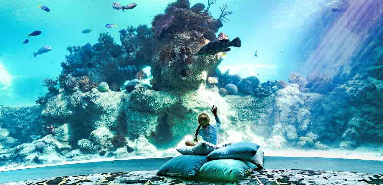 Living Reef, Daydream Island, Queensland