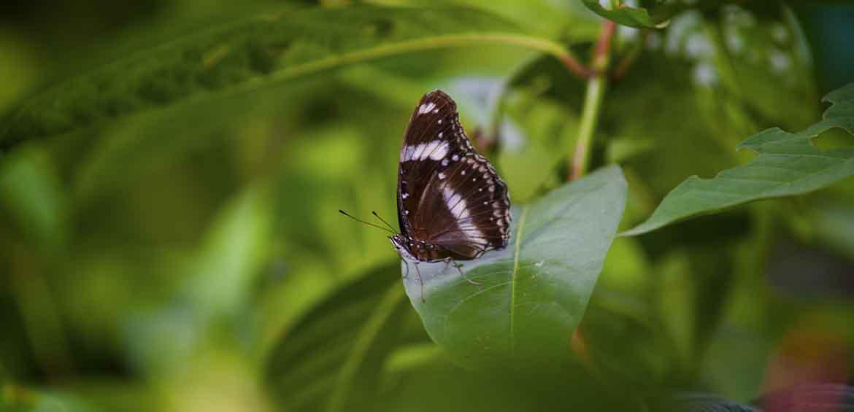 Kuala Lumpur Butterfly Park, Malaysia